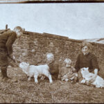 Watchtree farm was home to sheep!
