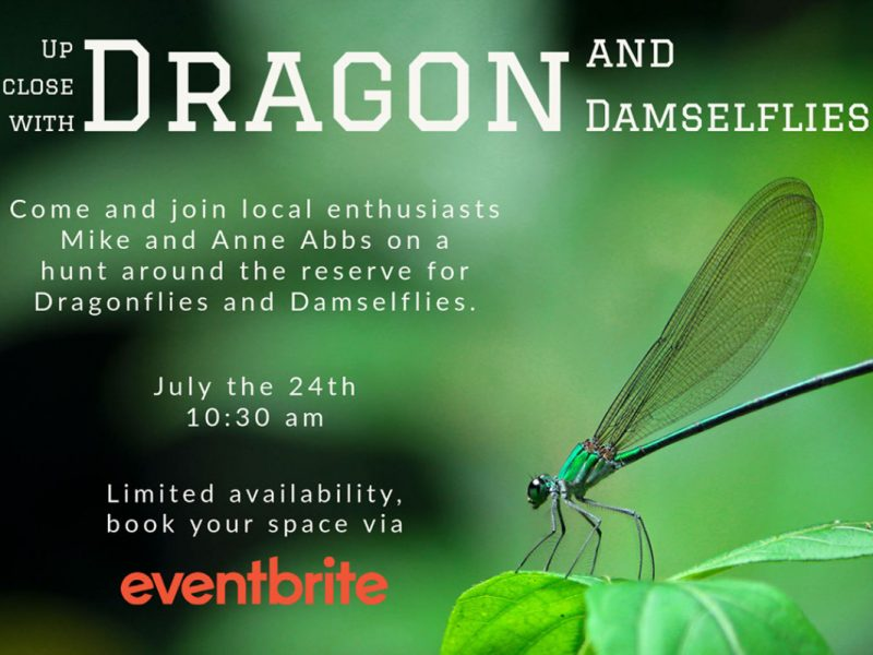 Dragon and Damselflies Up Close